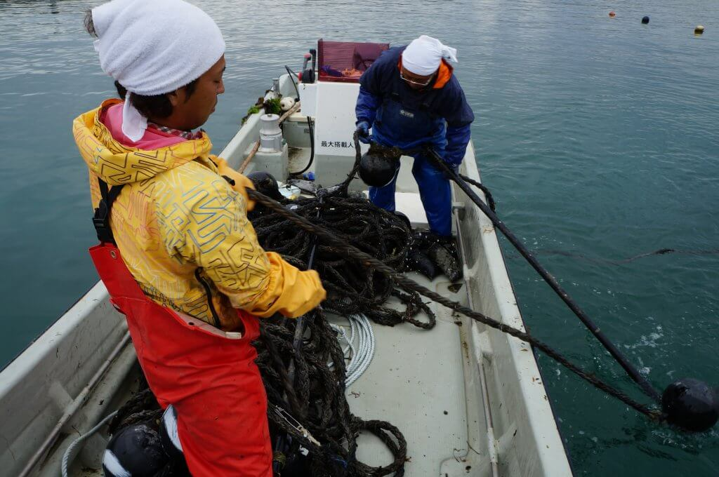 太いロープに挟み込んだわかめを海へ離します